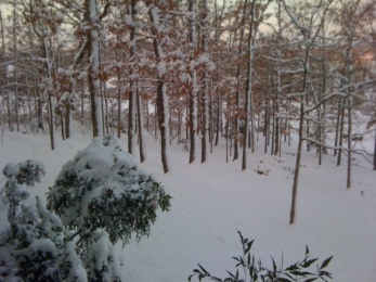 Snowy Hillside Dec 26 2012
